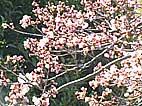 b33.jpg